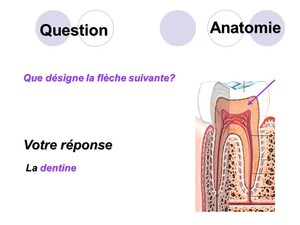 Question Que désigne la flèche suivante? Votre réponse La cavité pulpaire avec les vaisseaux sanguins et les nerfs Anatomie