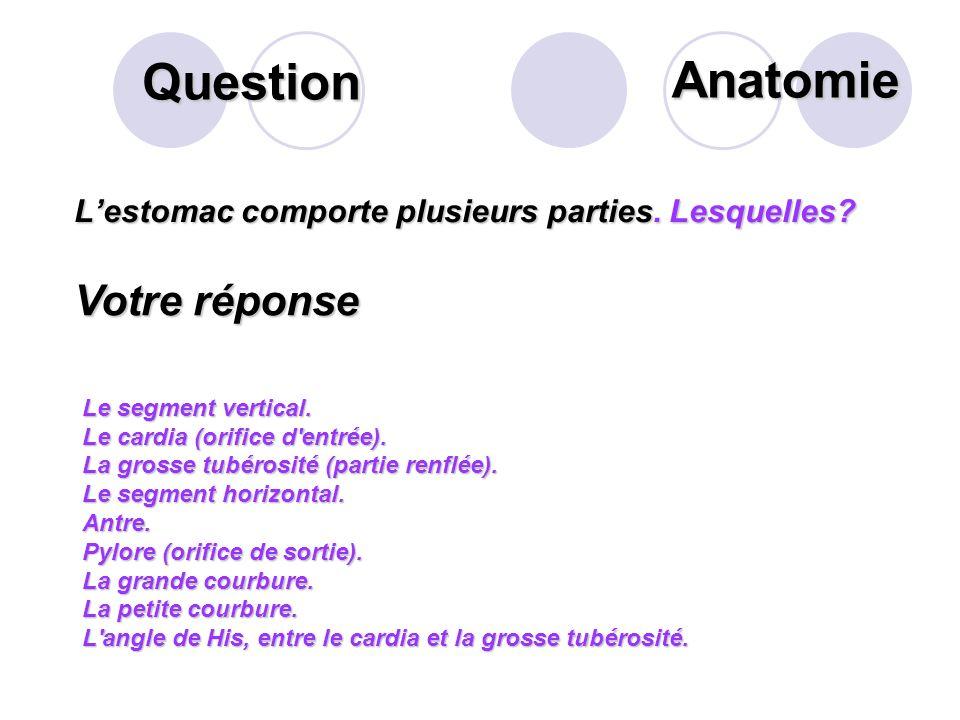 Question Que désigne la flèche suivante? Votre réponse La dentine Anatomie
