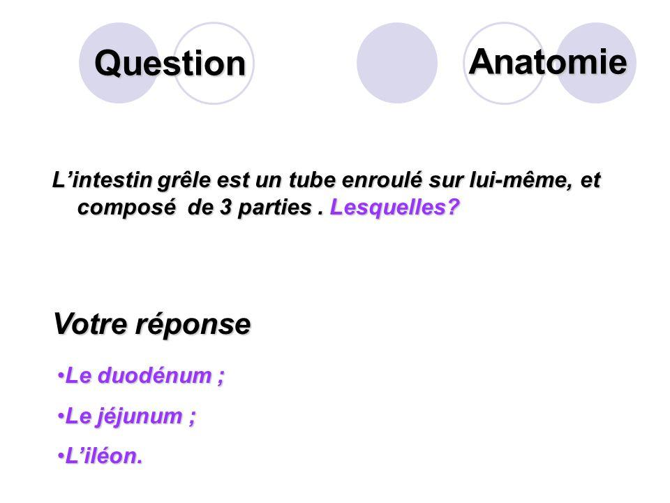 Question Lestomac comporte plusieurs parties. Lesquelles? Votre réponse Le segment vertical. Le cardia (orifice d'entrée). La grosse tubérosité (parti