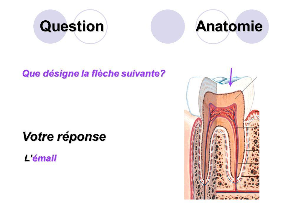 Question Sur ce schéma de lestomac, que désigne la flèche? Votre réponse L angle de His Anatomie