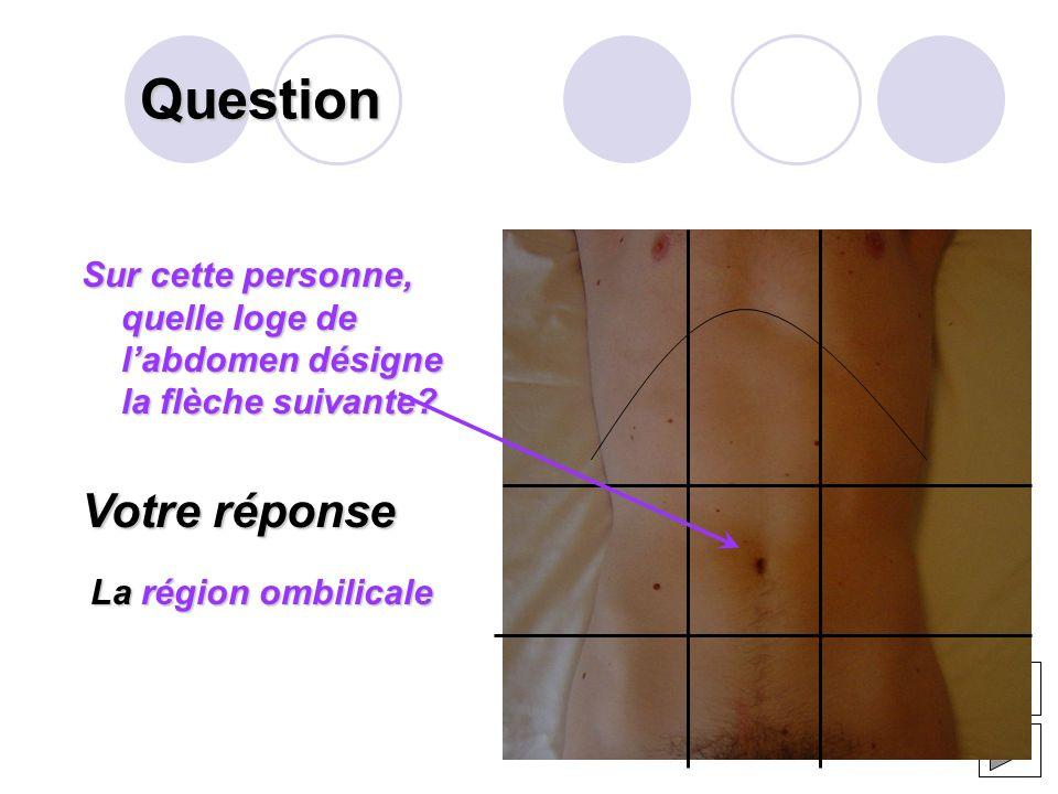 Question Que désigne la flèche suivante? Votre réponse Lémail Anatomie