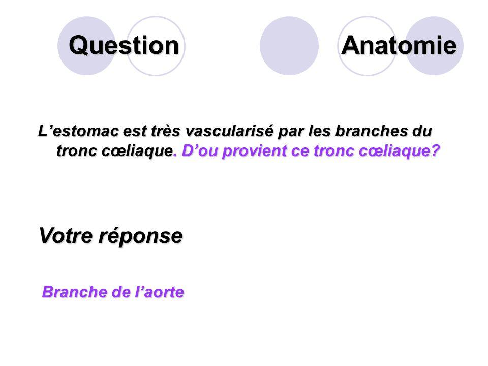 Question Lestomac présente sur sa face interne des replis dits plissements gastriques. Sur ces plissements se trouvent les glandes gastriques. Citer s