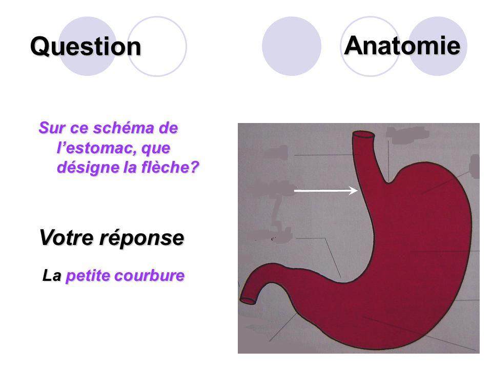 Question Définir la « colostomie ». Votre réponse Cest labouchement intentionnel dun organe creux (le colon) à la peau dans le but dassurer lévacuatio
