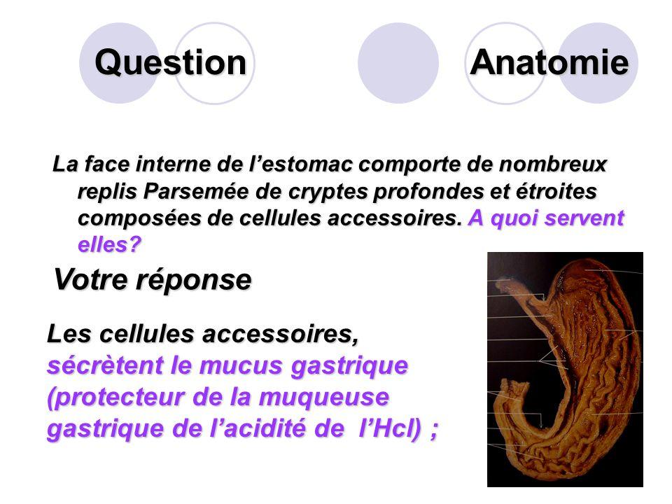 Question Que sécrètent les cellules pariétales des glandes gastriques situées sur les plissements internes de la muqueuse gastrique. Votre réponse Les