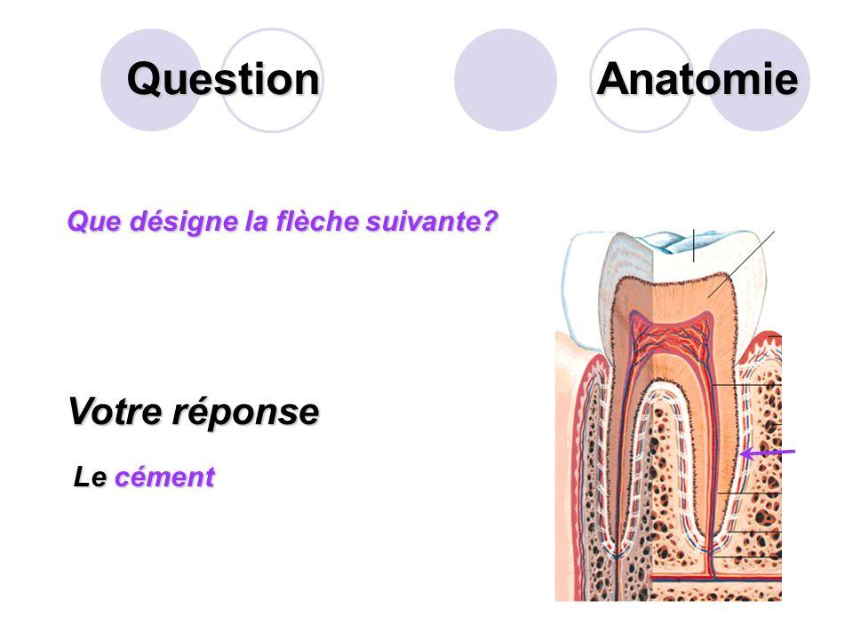 Question Lappareil digestif est un ensemble dorganes qui assurent la digestion. Il comprend les organes creux et les organes pleins. Citer 5 organes c