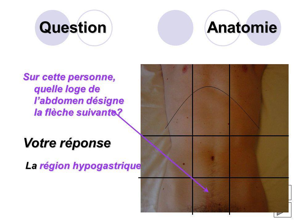 Question La salive intervient dans le mécanisme de la digestion.Elle est composée de 2 factions lune aqueuse et lautre muqueuse. Citer la composition