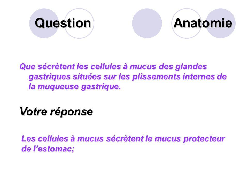 Question Sur cette personne, quelle loge de labdomen désigne la flèche suivante? Votre réponse La région hypogastrique Anatomie
