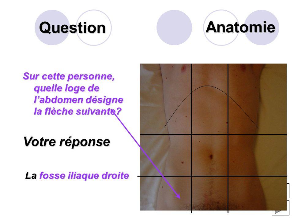 Question La langue est revêtue dune muqueuse rugueuse contenant des éléments particuliers importants pour son rôle. Qui sont-ils ? Votre réponse Les r