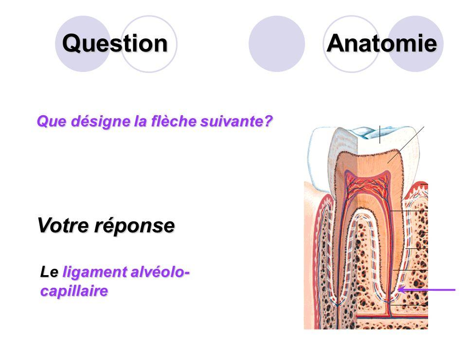 Question Sur cette personne, quelle loge de labdomen désigne la flèche suivante? Votre réponse La fosse iliaque droite Anatomie