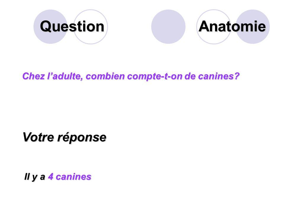 Question Que désigne la flèche suivante? Votre réponse Le ligament alvéolo- capillaire Anatomie