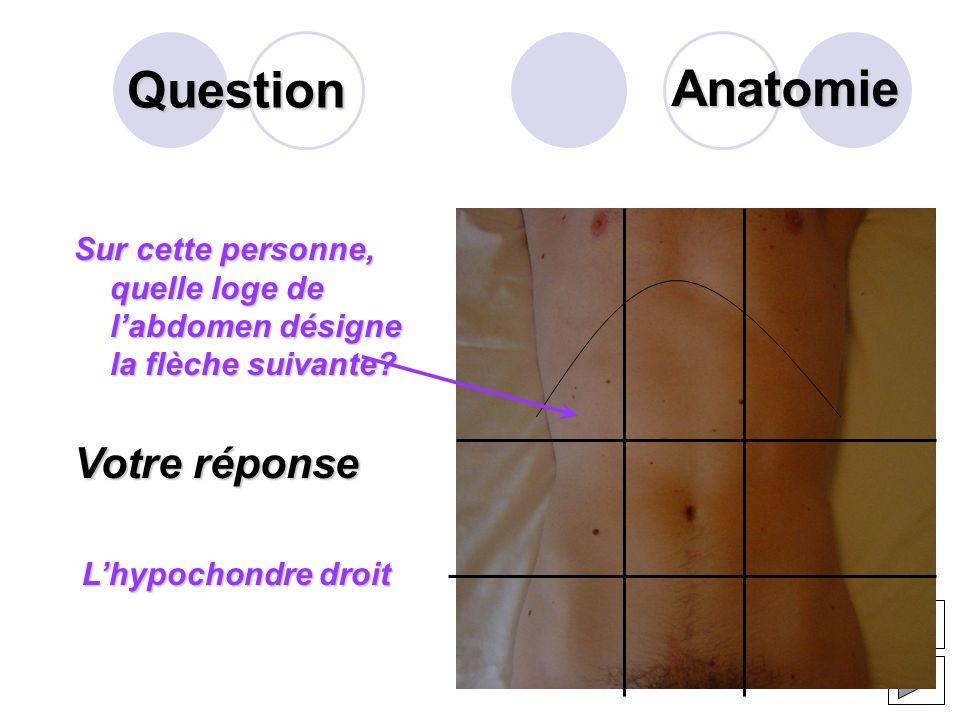 Question Sur ce schéma du bloc duodéno- pancréatique, que désigne la flèche? Votre réponse Le corps du pancréas Anatomie