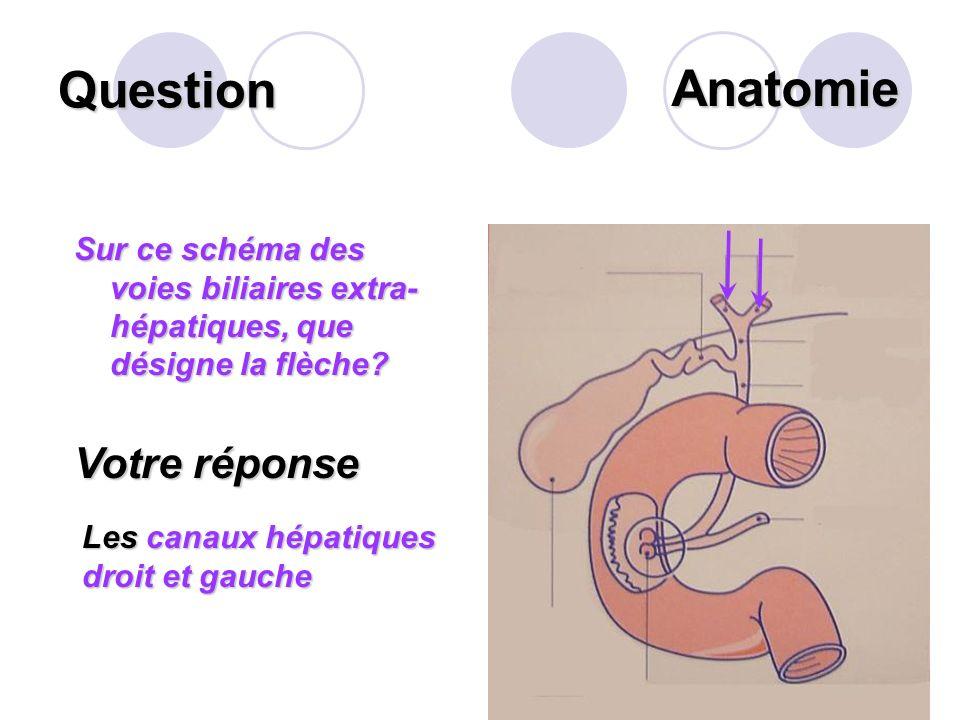 Question Je suis une paire de glandes situées entre le maxillaire inférieur et les muscles de la langue. Je sécrète la salive et lexcrète par le canal