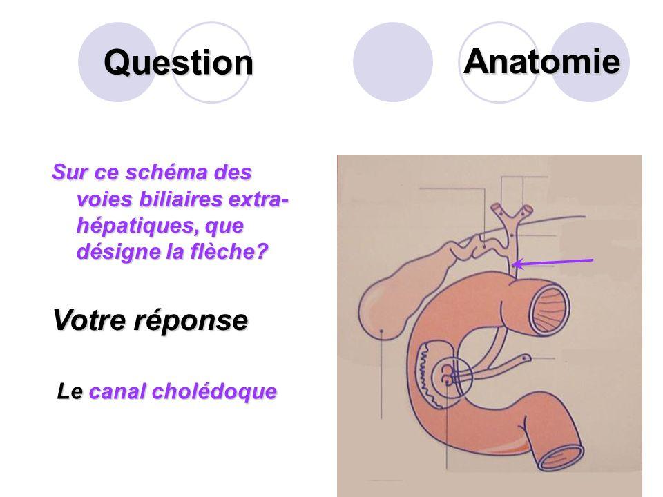 Question Citer succinctement la composition du suc gastrique? Votre réponse Pepsine ;Pepsine ; Des mucines;Des mucines; Lacide chlorhydrique.Lacide ch
