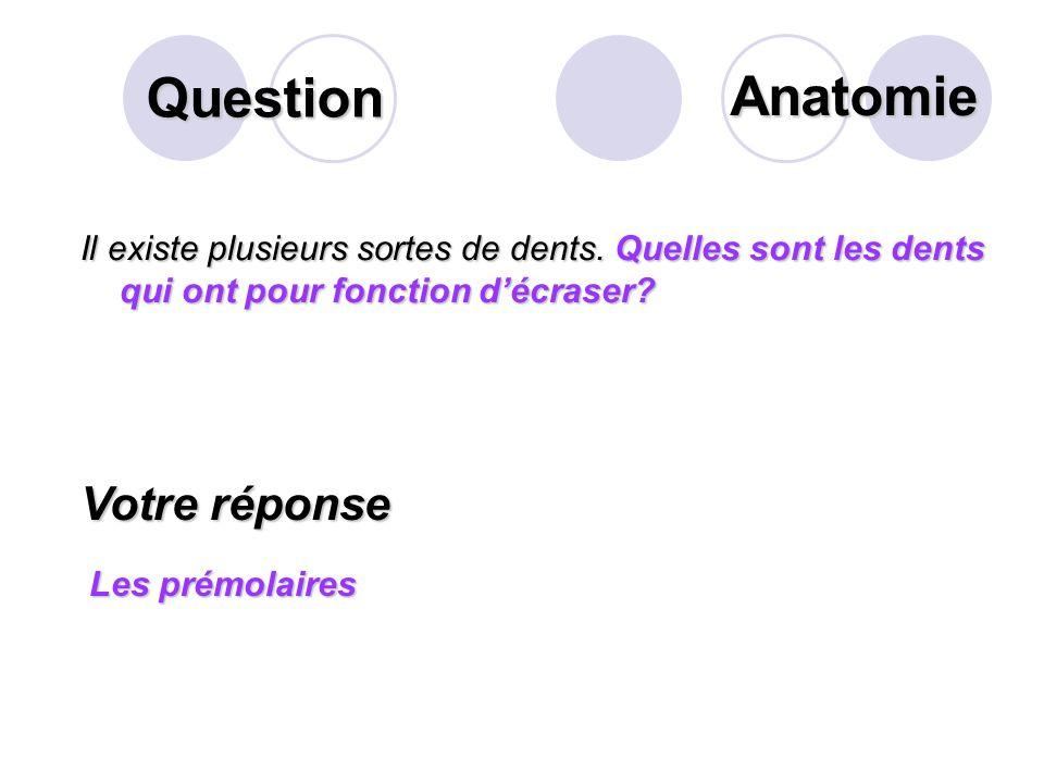 Question Sur ce schéma des voies biliaires extra- hépatiques, que désigne la flèche? Votre réponse Le canal cholédoque Anatomie