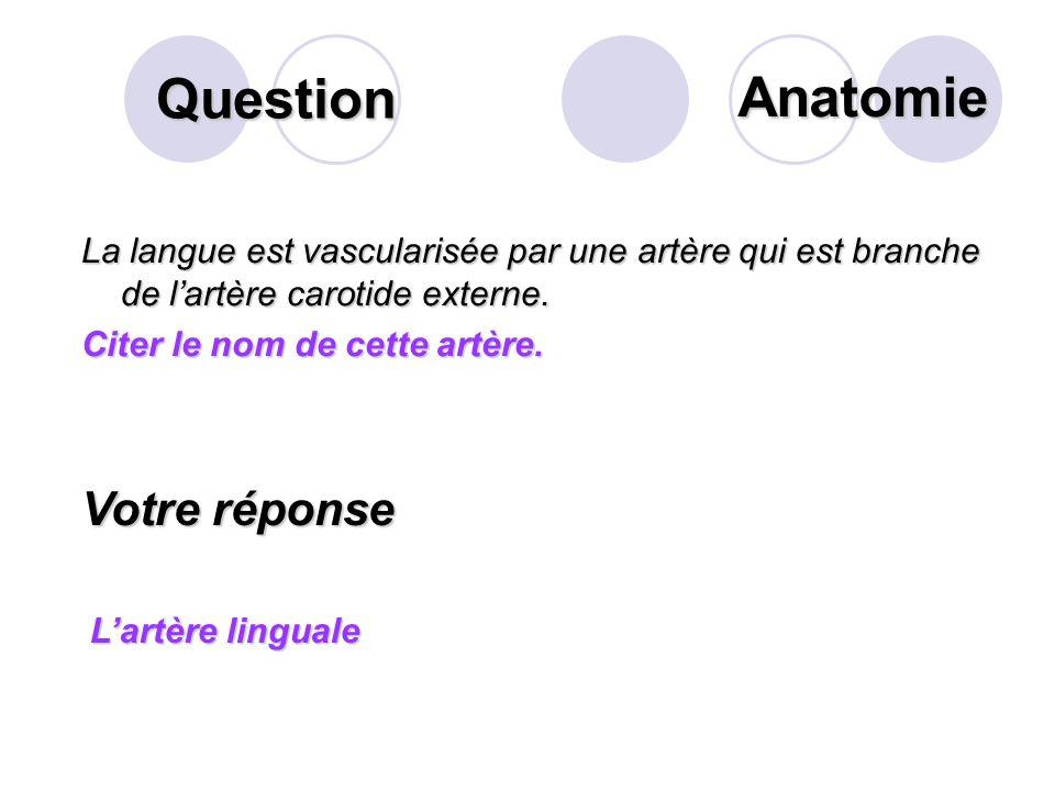 Question Sur ce schéma du bloc duodéno- pancréatique, que désigne la flèche? Votre réponse L aorte abdominale Anatomie