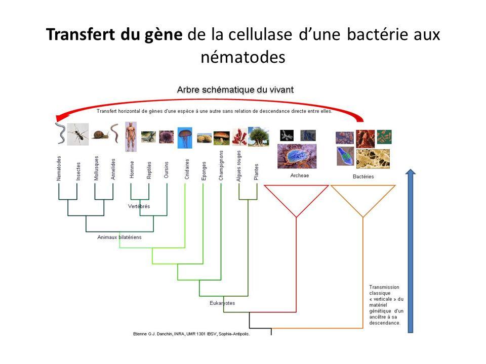 Transfert horizontal de gènes Ce processus évolutifs est encore hypothétique et n a pu être établi que chez certaines espèces.
