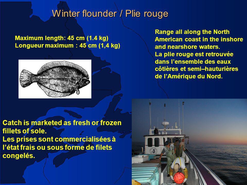 Poisson de fond /Groundfish, Mar.