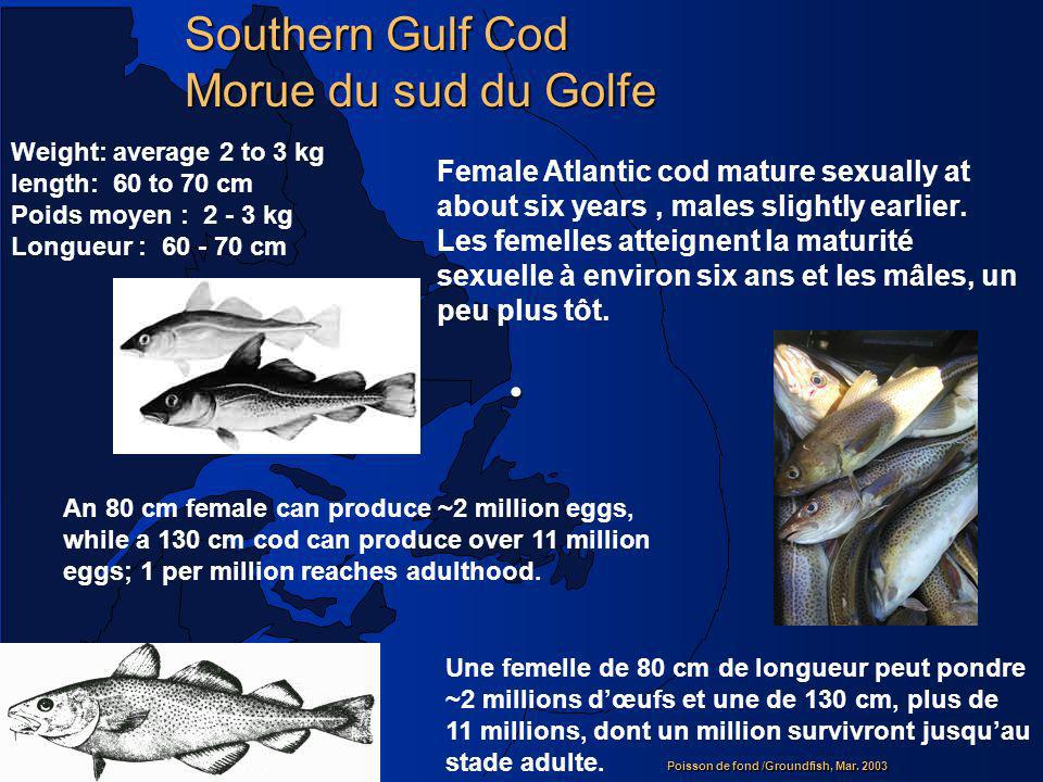 Poisson de fond /Groundfish, Mar. 2003 Southern Gulf Cod Morue du sud du Golfe Weight: average 2 to 3 kg length: 60 to 70 cm Poids moyen : 2 - 3 kg Lo