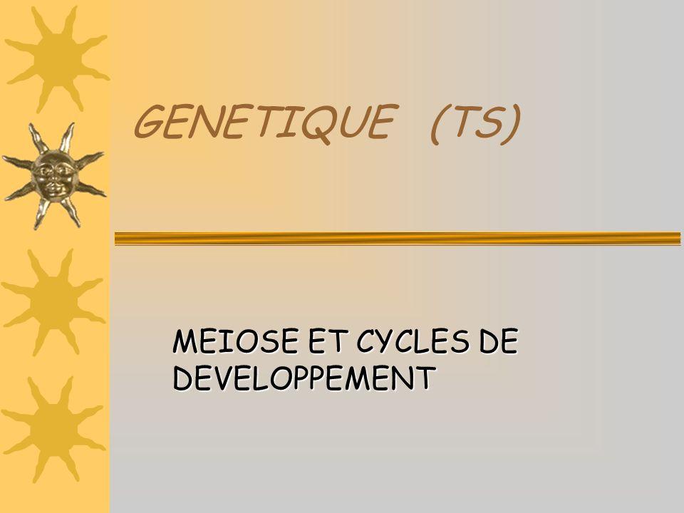 La fécondationcaryogamie Noyau de la cellule œuf (2n chrs à 2 chds chacun) cellule œuf diploïde spermatozoïde haploïde ovocyte haploïde Chromosomes paternels Chromosomes maternels Fécondation simplifiée En fin de méiose, chaque individu produit des gamètes haploïdes La fécondation correspond à la fusion de 2 gamètes ( et ) La fécondation rétablit la diploïdie