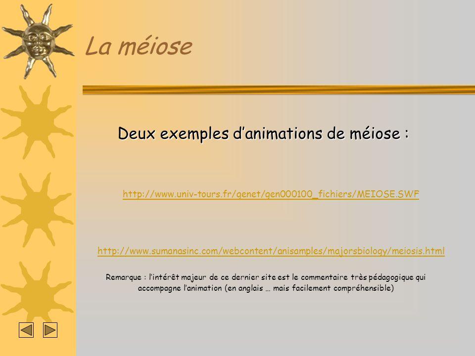 La méiose Deux exemples danimations de méiose : Remarque : lintérêt majeur de ce dernier site est le commentaire très pédagogique qui accompagne lanim
