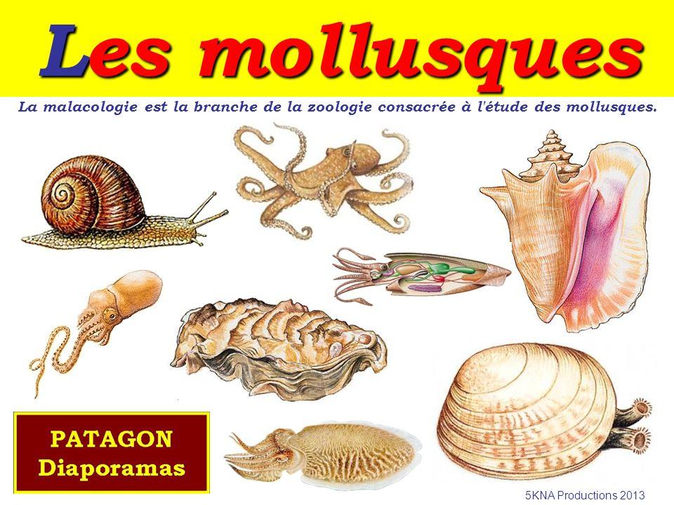 Les mollusques La malacologie est la branche de la zoologie consacrée à l étude des mollusques.