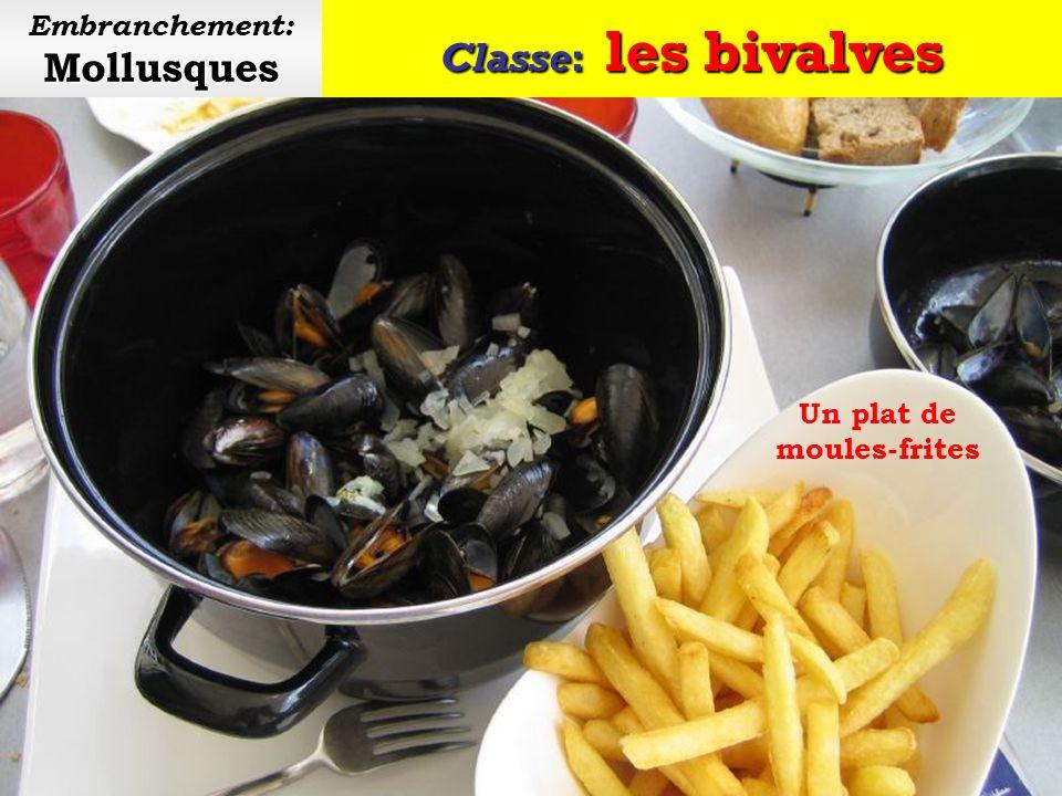Classe: les bivalves Mollusques Embranchement: Mollusques Élevage de moules sur des bouchots