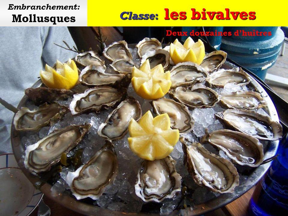 Classe: les bivalves Mollusques Embranchement: Mollusques Parc à huîtres