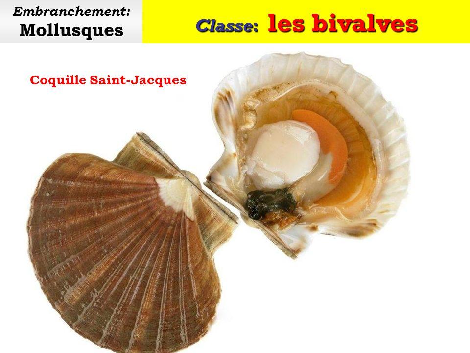 Classe: les bivalves Mollusques Embranchement: Mollusques Deux douzaines dhuîtres
