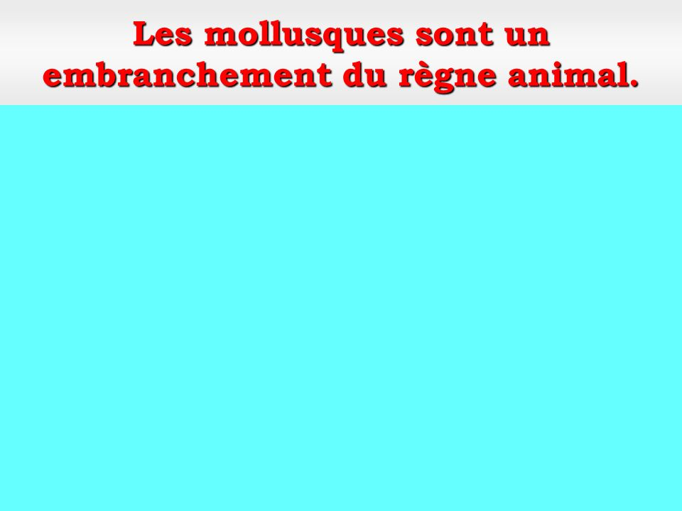 Classe: les bivalves Mollusques Embranchement: Mollusques Respecter les tailles règlementaires