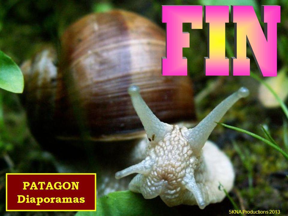 Classe: les céphalopodes Mollusques Embranchement: Mollusques Nautile