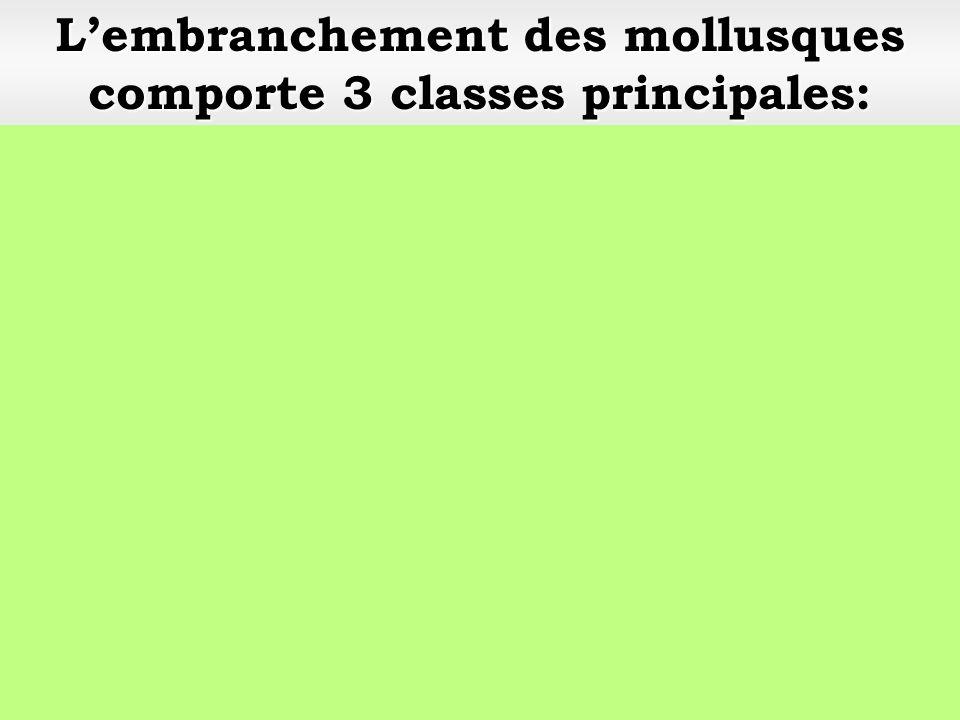 Classe: les gastéropodes Mollusques Embranchement: Mollusques Escargot petit-gris (Helix aspersa)