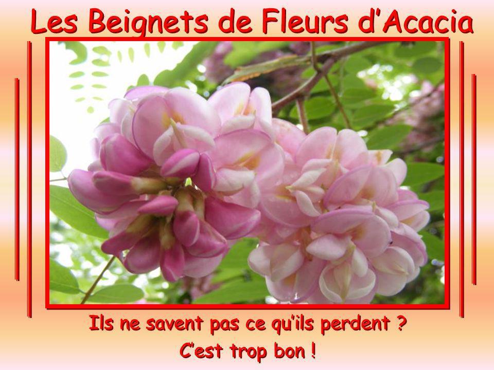Les Beignets de Fleurs dAcacia À ceux qui nont jamais eux le bonheur de goûter un Beignet de Fleurs dacacia.
