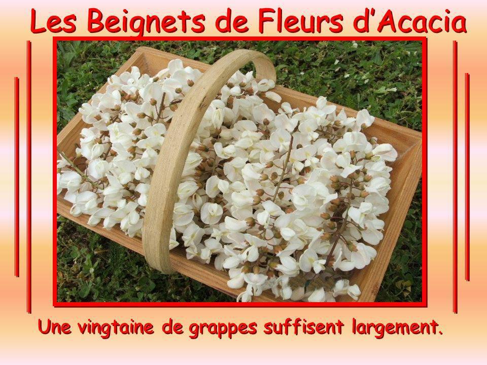 Les Beignets de Fleurs dAcacia La cueillette des Fleurs. Loccasion de faire une belle ballade à vélo. La cueillette des Fleurs. Loccasion de faire une