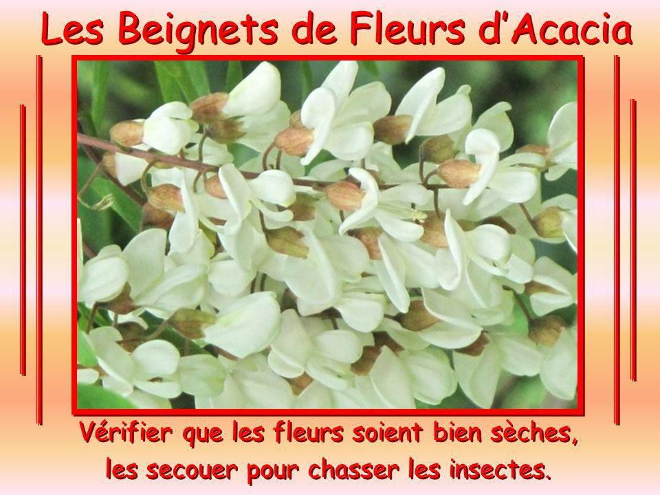 Les Beignets de Fleurs dAcacia Vérifier que les fleurs soient bien sèches, les secouer pour chasser les insectes.