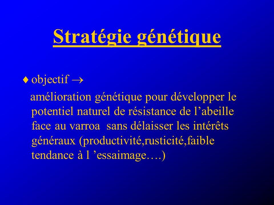 Stratégie génétique objectif amélioration génétique pour développer le potentiel naturel de résistance de labeille face au varroa sans délaisser les intérêts généraux (productivité,rusticité,faible tendance à l essaimage….)