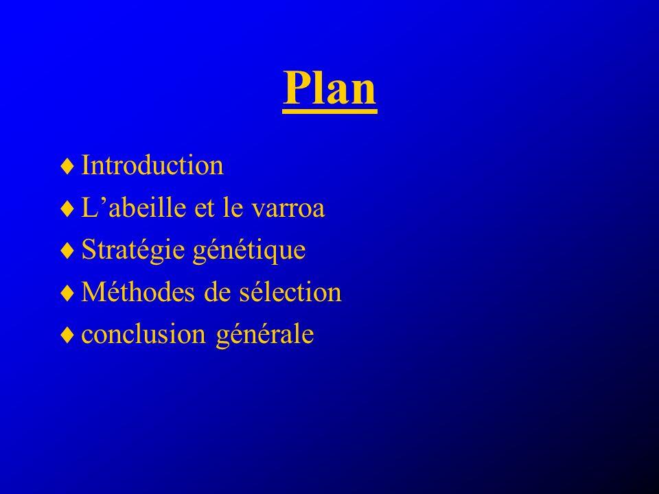 Plan Introduction Labeille et le varroa Stratégie génétique Méthodes de sélection conclusion générale