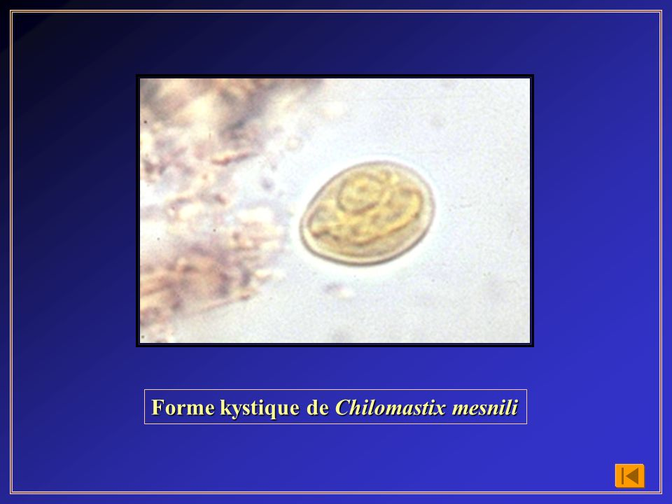 Cycle évolutif de Clonorchis sinensis