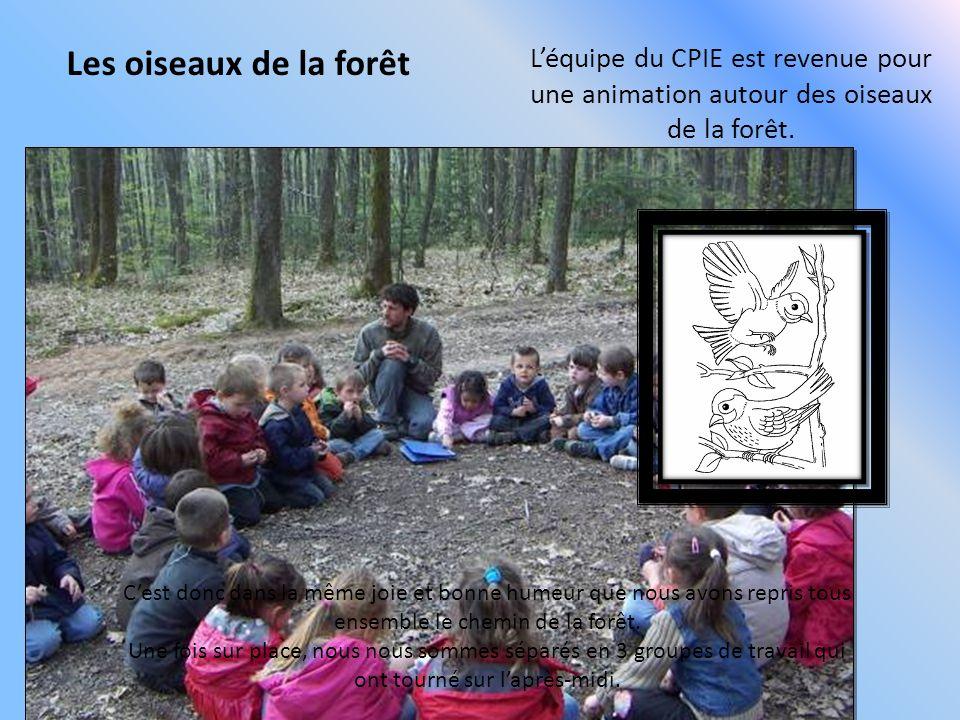 Les oiseaux de la forêt Léquipe du CPIE est revenue pour une animation autour des oiseaux de la forêt. Cest donc dans la même joie et bonne humeur que