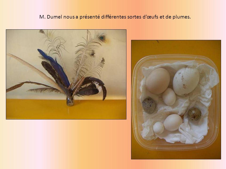 M. Dumel nous a présenté différentes sortes dœufs et de plumes.