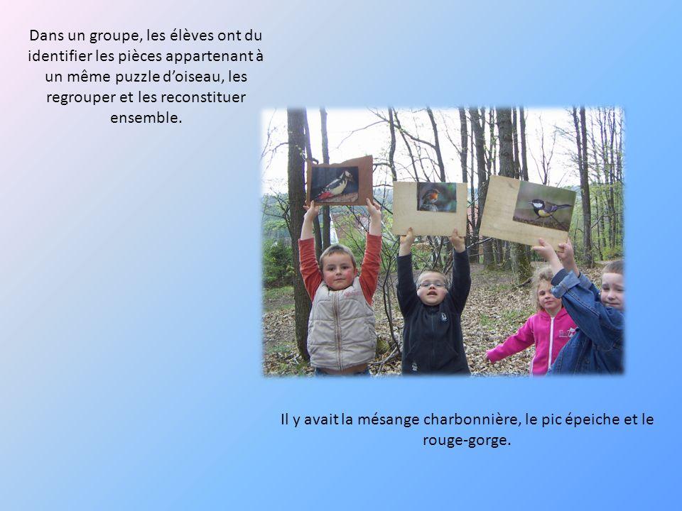 Dans un groupe, les élèves ont du identifier les pièces appartenant à un même puzzle doiseau, les regrouper et les reconstituer ensemble. Il y avait l