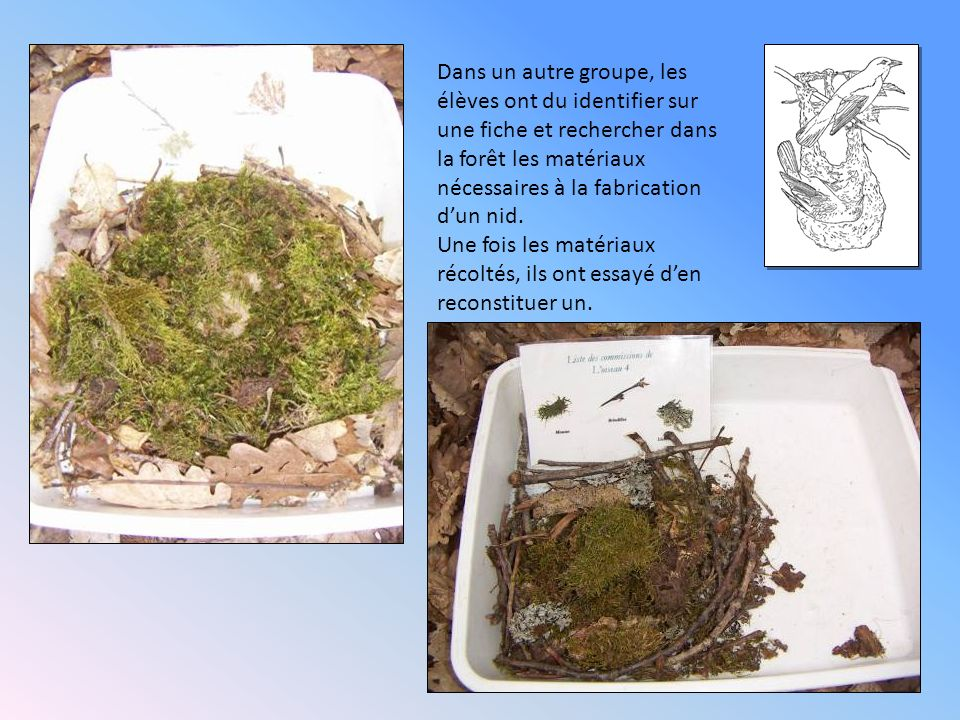 Dans un autre groupe, les élèves ont du identifier sur une fiche et rechercher dans la forêt les matériaux nécessaires à la fabrication dun nid. Une f
