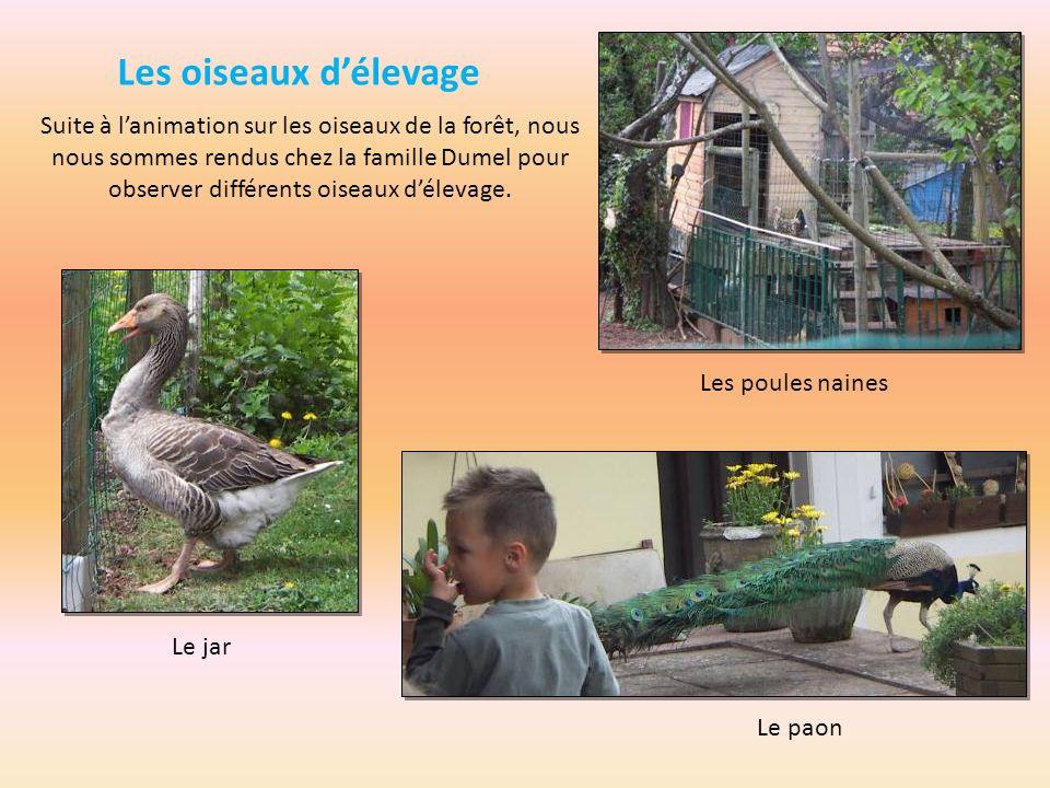 Les oiseaux délevage Suite à lanimation sur les oiseaux de la forêt, nous nous sommes rendus chez la famille Dumel pour observer différents oiseaux dé