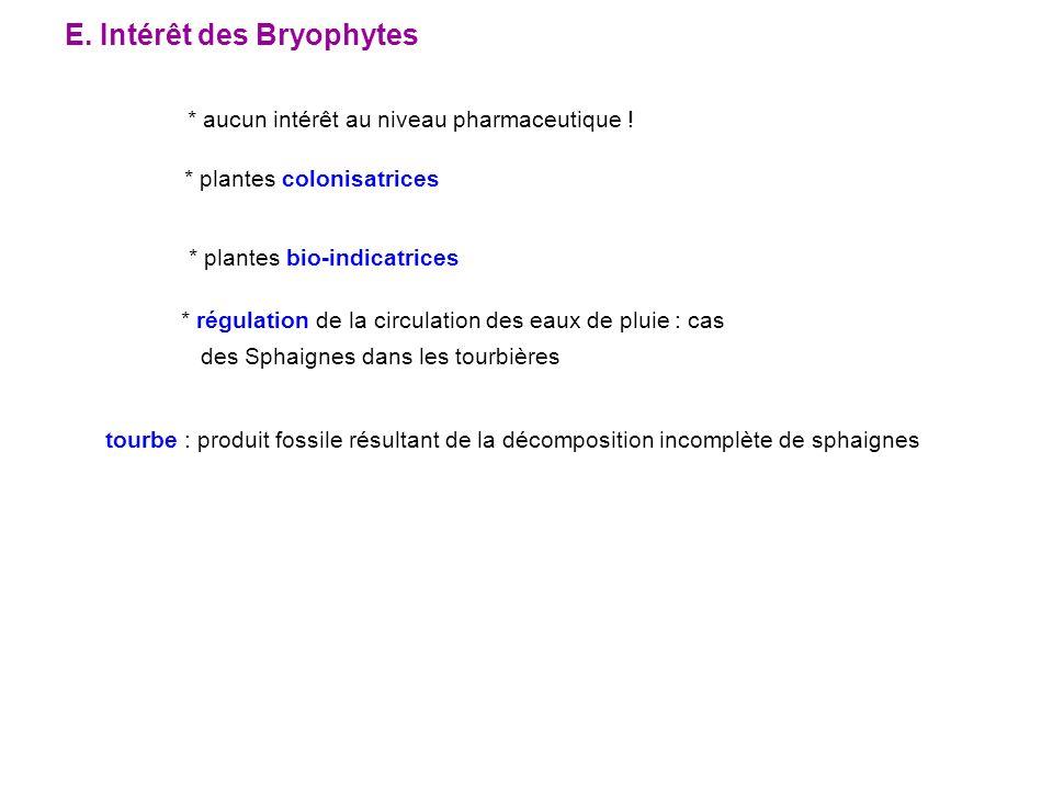 E. Intérêt des Bryophytes * aucun intérêt au niveau pharmaceutique ! * plantes colonisatrices * régulation de la circulation des eaux de pluie : cas d