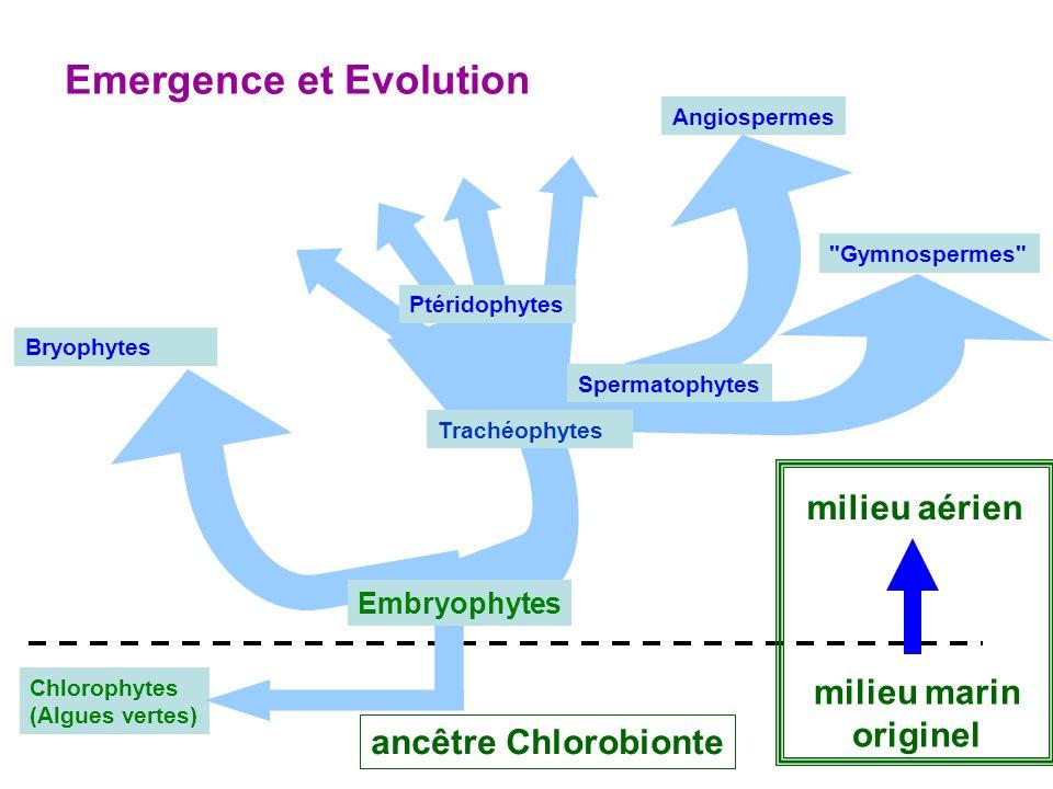 Chlorophytes (Algues vertes) Bryophytes Angiospermes Gymnospermes Ptéridophytes Spermatophytes Emergence et Evolution milieu aérien milieu marin originel ancêtre Chlorobionte Embryophytes Trachéophytes