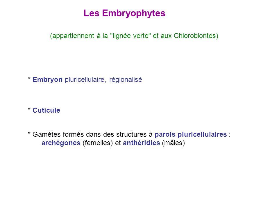Les Embryophytes * Embryon pluricellulaire, régionalisé * Cuticule * Gamètes formés dans des structures à parois pluricellulaires : archégones (femell