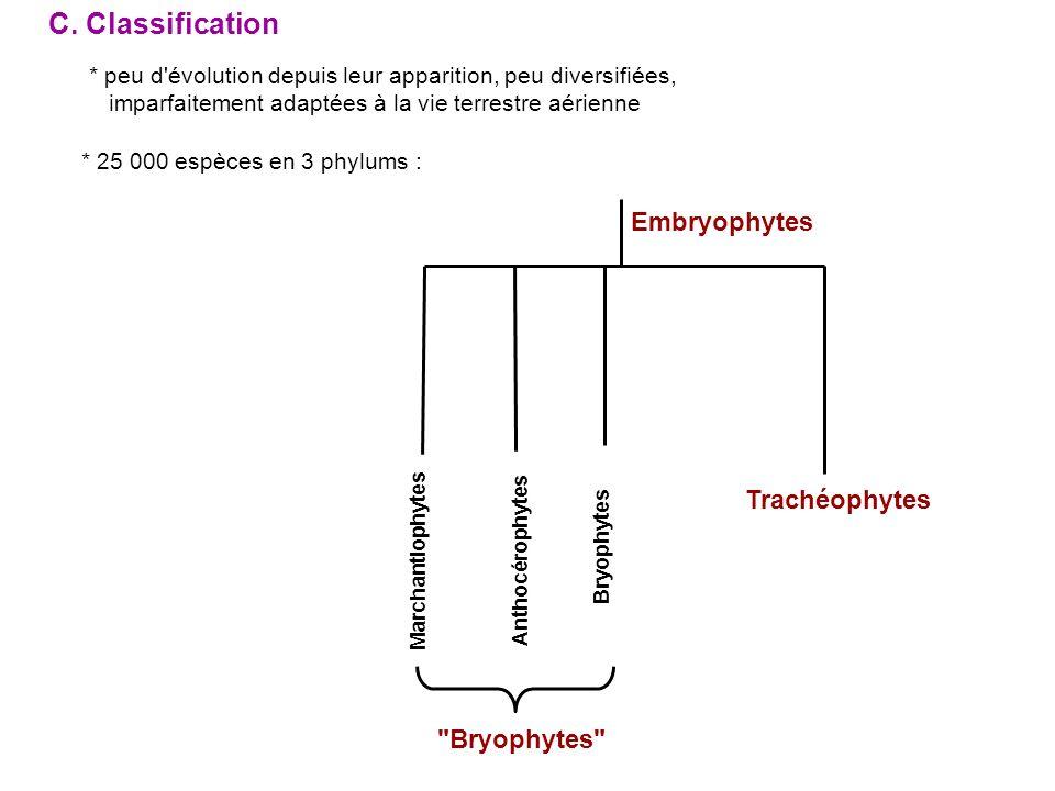 les Marchantiophytes (ou Hépatiques) : gamétophyte thalloïde ou feuillé (fontaines, cascades,…) les Anthocérophytes : gamétophyte thalloïde les Bryophytes sensu stricto : gamétophyte feuillé * sporophyte toujours formé d une soie terminée par une capsule * multiplication végétative très importante + ordre des Bryales (= Mousses) 15 000 espèces + ordre des Sphagnales 2 ordres : * chez certaines espèces de mousses, présence de tissus conducteurs : hydroïdes (fonction de bois) et leptoïdes (fonction de liber)