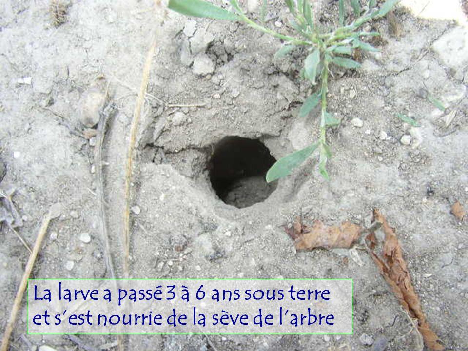 Un petit verger en Provence