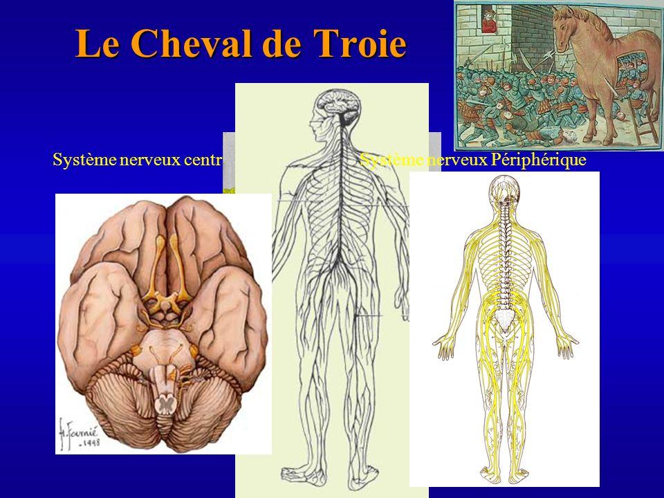 Le Cheval de Troie Système nerveux centralSystème nerveux Périphérique