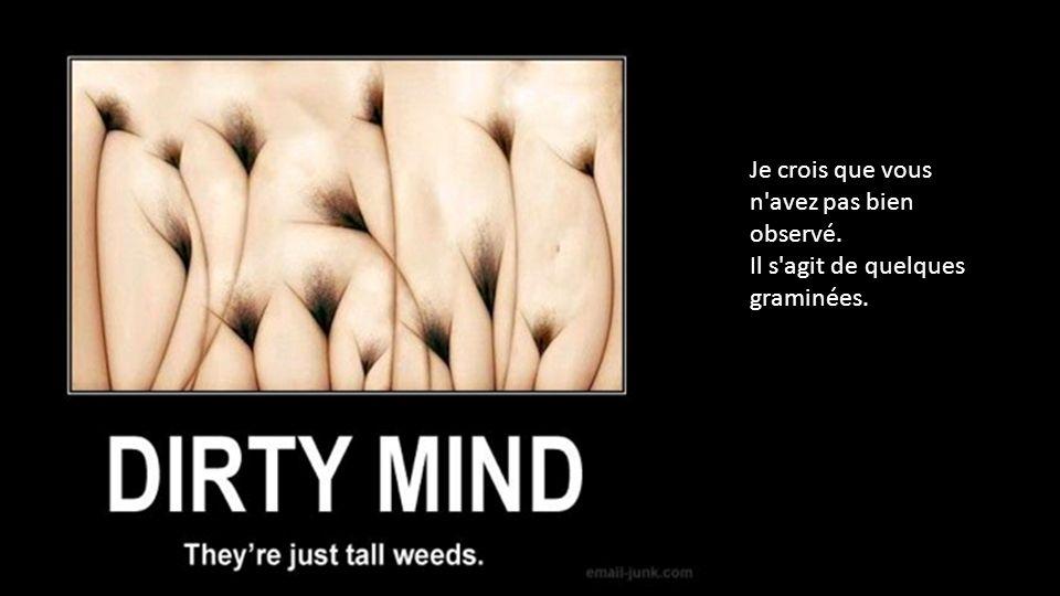 Je crois que vous n avez pas bien observé. Il s agit de quelques graminées.