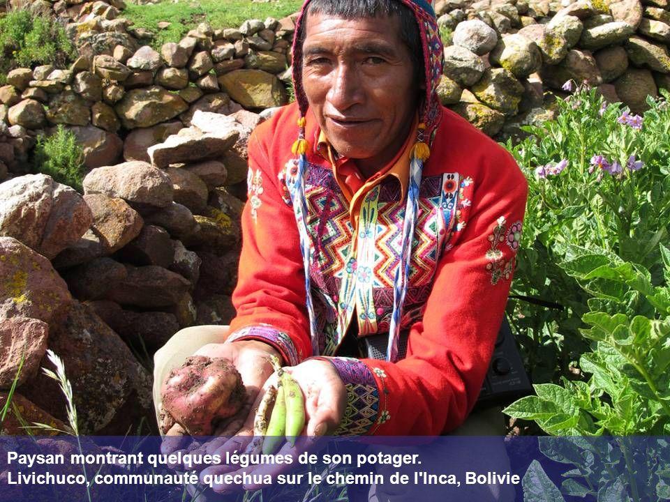 Paysan montrant quelques légumes de son potager. Livichuco, communauté quechua sur le chemin de l'Inca, Bolivie